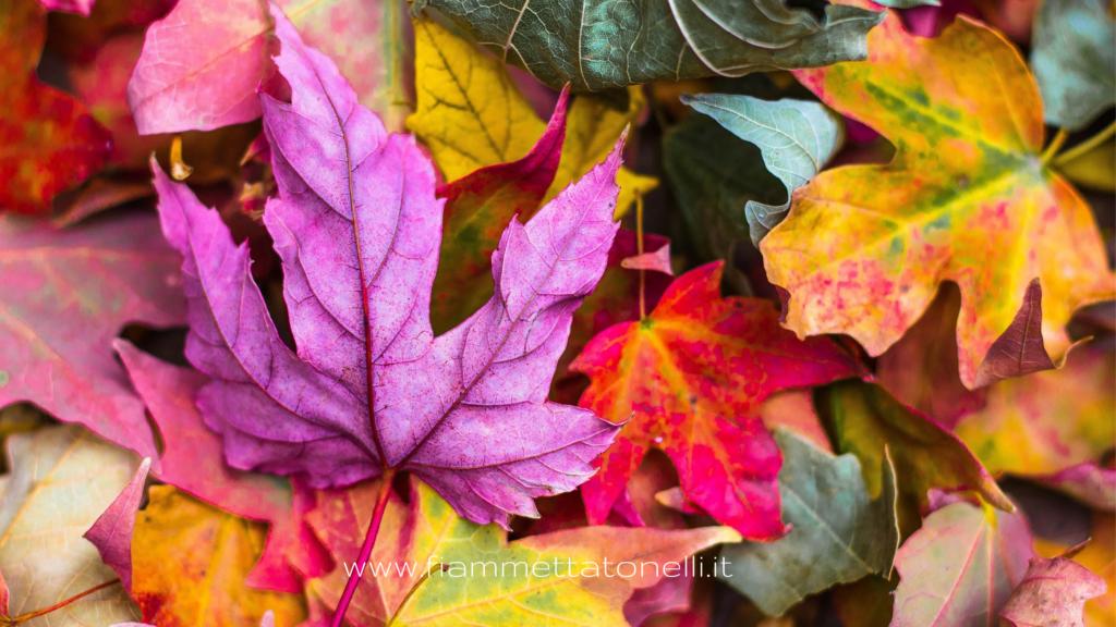 foliage autunnali che colorano la tristezza, la malinconia. Si muore ogni giorno